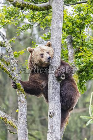 germany bavarian forest national park animal