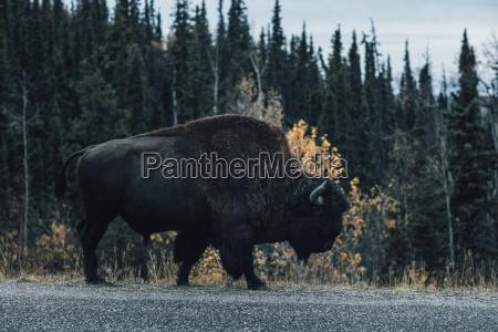 canada british columbia northern rockies alaska