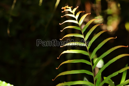 leaves in the jungle of sinharaja