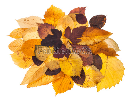 pile of various autumn fallen leaves