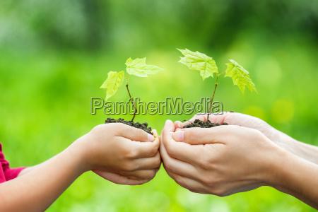 erwachsener und kind die kleine gruenpflanze