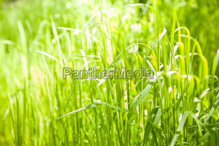gruenes gras hintergrund