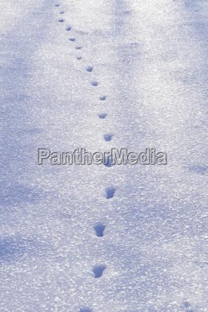 high angle view of animal footprints