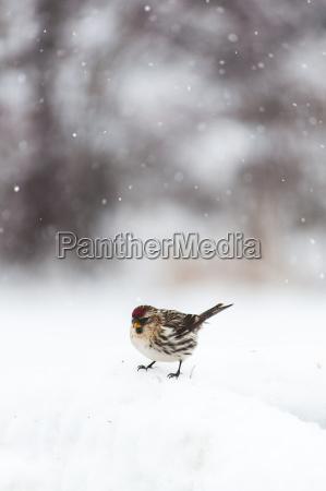 close up of bird perching on