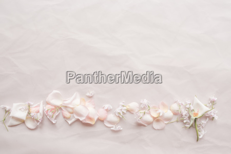 tender pink wedding background