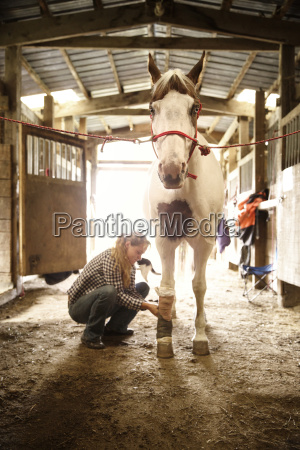 cowgirl bandaging leg of horse in