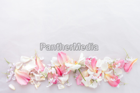 petals on pink background