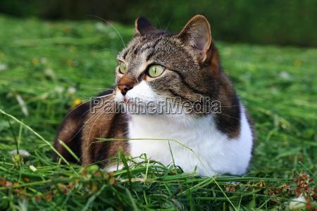 a little pretty cat is lying
