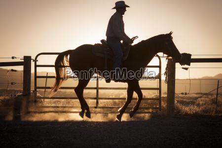silhouette man riding horse in farm
