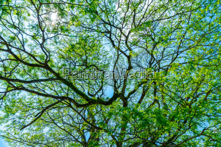 beautiful fresh green tree background