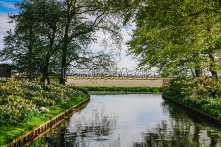 tulpenfelder in holland im fruehling
