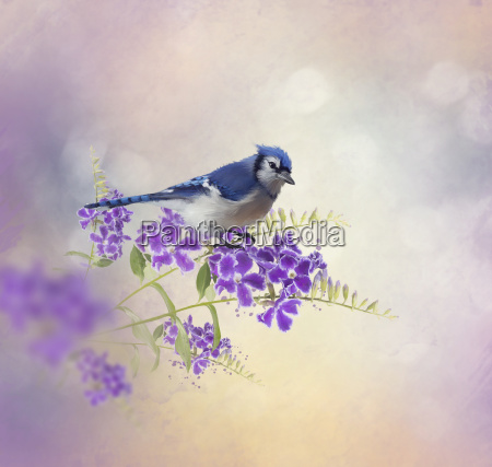 blue jay perching on blue flowers