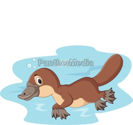 cartoon happy platypus swimming