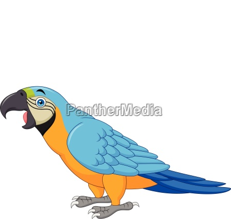 cartoon blue macaw isolated on white
