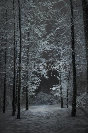 ruhige ansicht des schnees deckte baeume