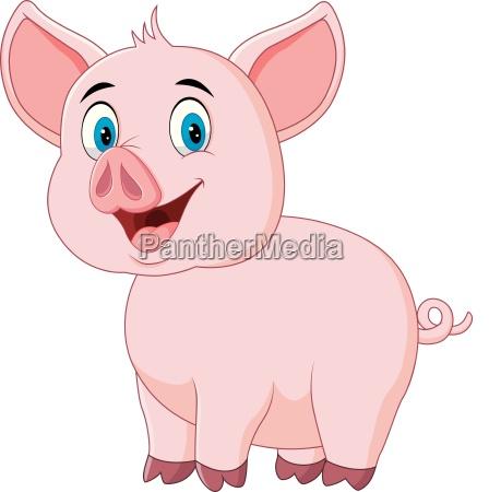 nette schweinaufstellung getrennt auf weissem hintergrund
