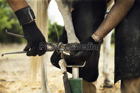 midsection of farrier putting shoe to