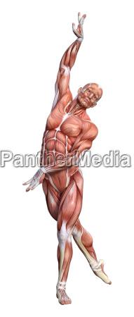 3d rendering maennliche anatomie figur auf