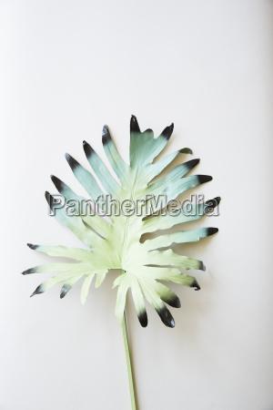 stilleben blatt baumblatt freisteller farbe abgeschieden