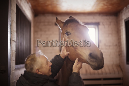 man stroking horse while standing in