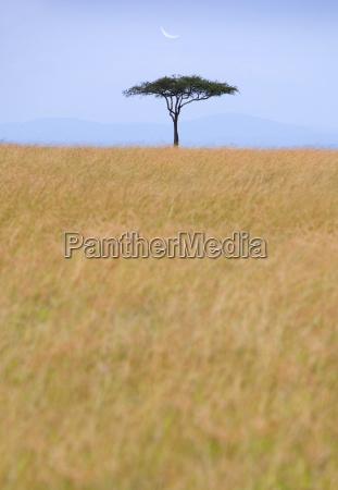 ansicht ueber afrikanische savanne mit entfernter