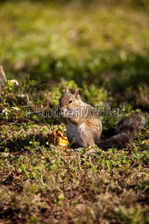 tier eichhorn eichhoernchen essen essend isst