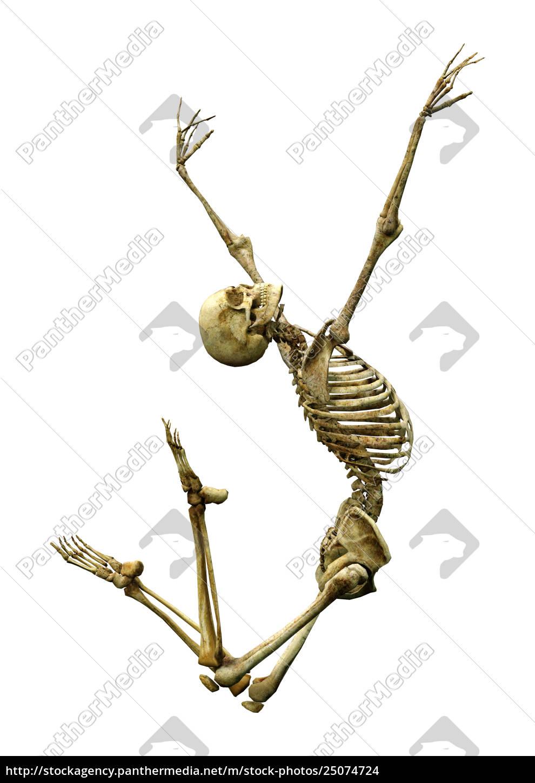 3d Rendering Human Skeleton On White Lizenzfreies Foto 25074724