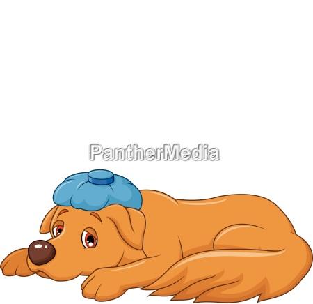 cartoon kranker hund mit eisbeutel isoliert