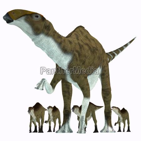 brachylophosaurus pflanzenfresser dinosaurier