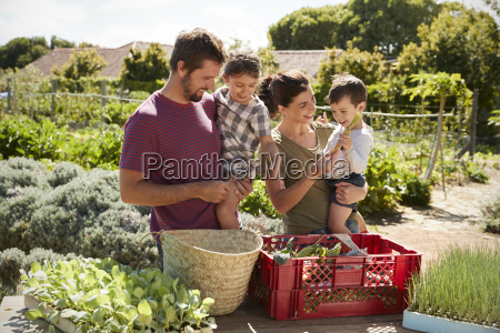 family working on community allotment together