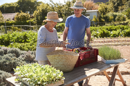 mature couple working on community allotment