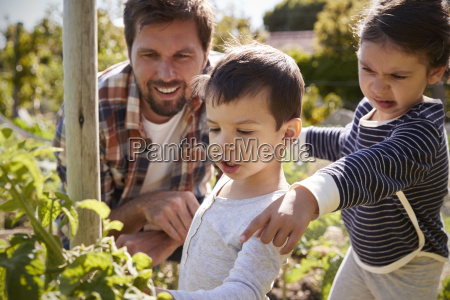 father and children looking at tomatoes