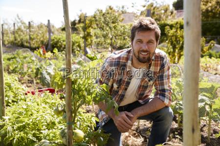 portrait of man checking tomato plants