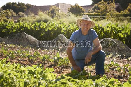 portrait of mature man harvesting beetroot