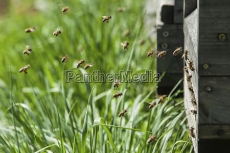 tier insekt landwirtschaft ackerbau deutschland brd