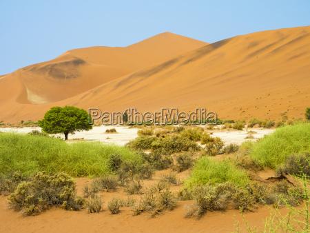 afrika namibia namib wueste naukluft nationalpark