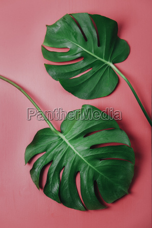 blatt baumblatt fluessig farbe gruen gruenes