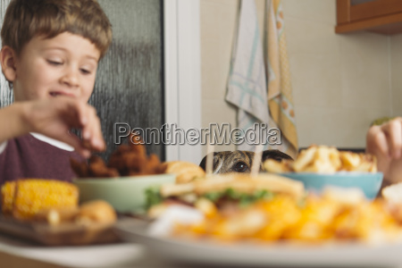 dog watching boy eating at dining