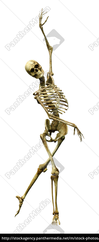 3d Rendering Human Skeleton On White Lizenzfreies Foto 25135880