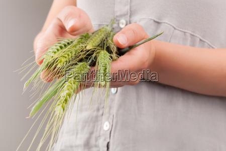 wheat ears in female hands