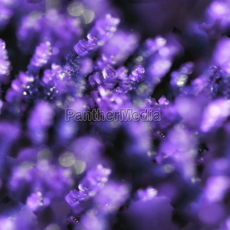 soft purple spring background tileable