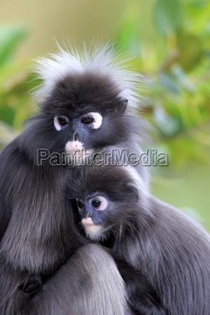animal mammal fauna asia animals portrait