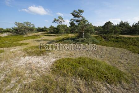 succession in a dune landscape darsser