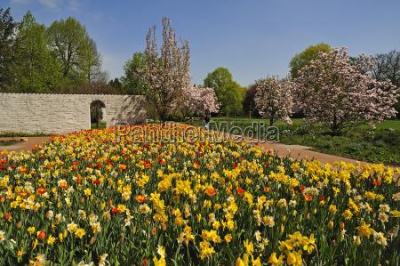 buntes blumenbeet mit tulpen tulipa und