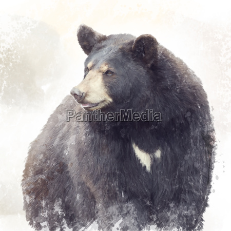 black bear watercolor
