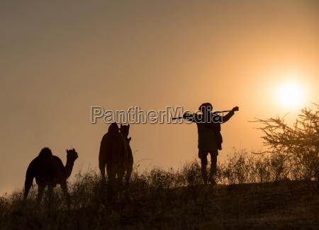 kameltreiber mit seinen kamelen in der