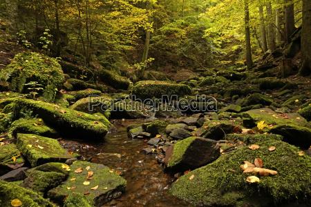 landschaft im monbachtal bei bad