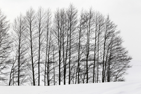 bucolic tree trees cold black swarthy