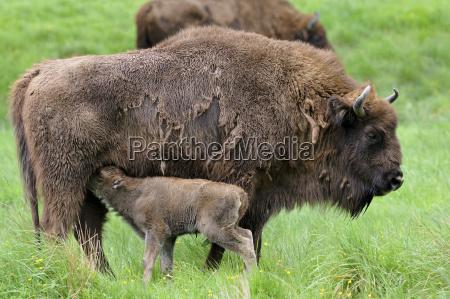 animal fauna animals sights europe sightseeing