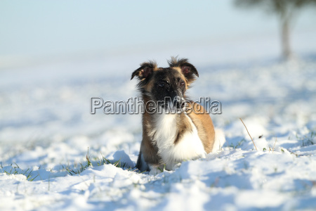 pet mammal fauna cold portrait pets